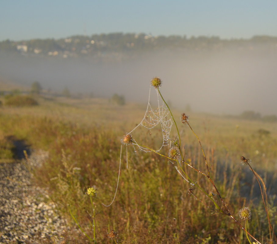 Утро было туманное и морозное. - Анатолий Пашковский