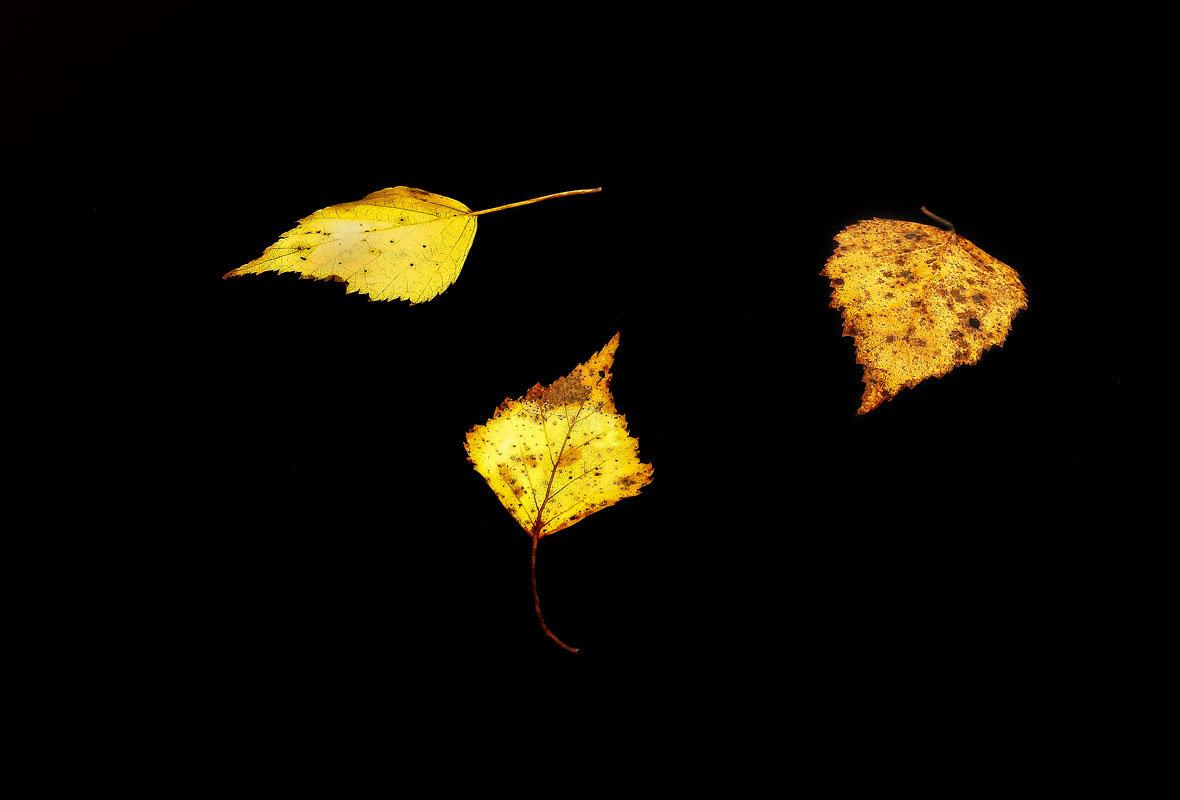 Парящие в темноте - Irina-77 Владимировна