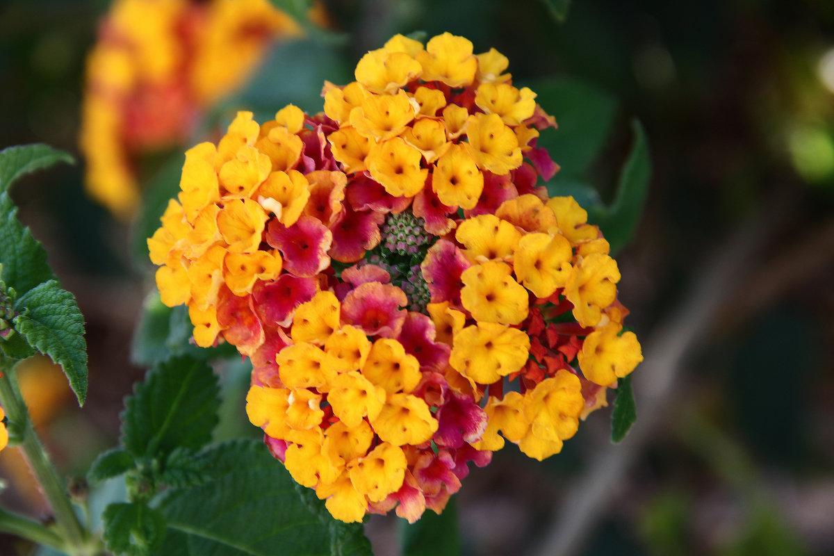Разноцветный цветок - Александр Яковлев