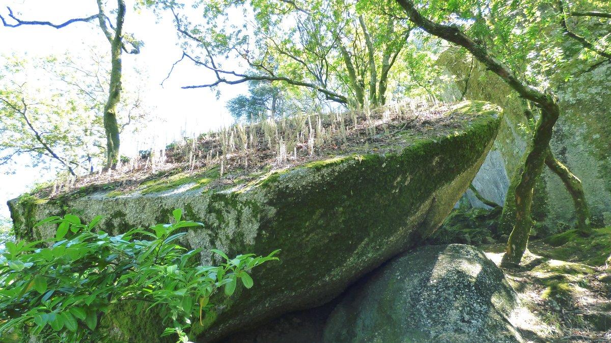 Парк камней - Ольга Васильева