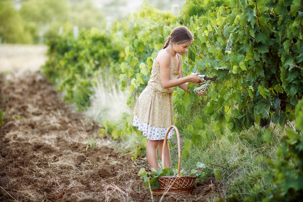 Сборщица винограда - Александр и Лариса Коноплины
