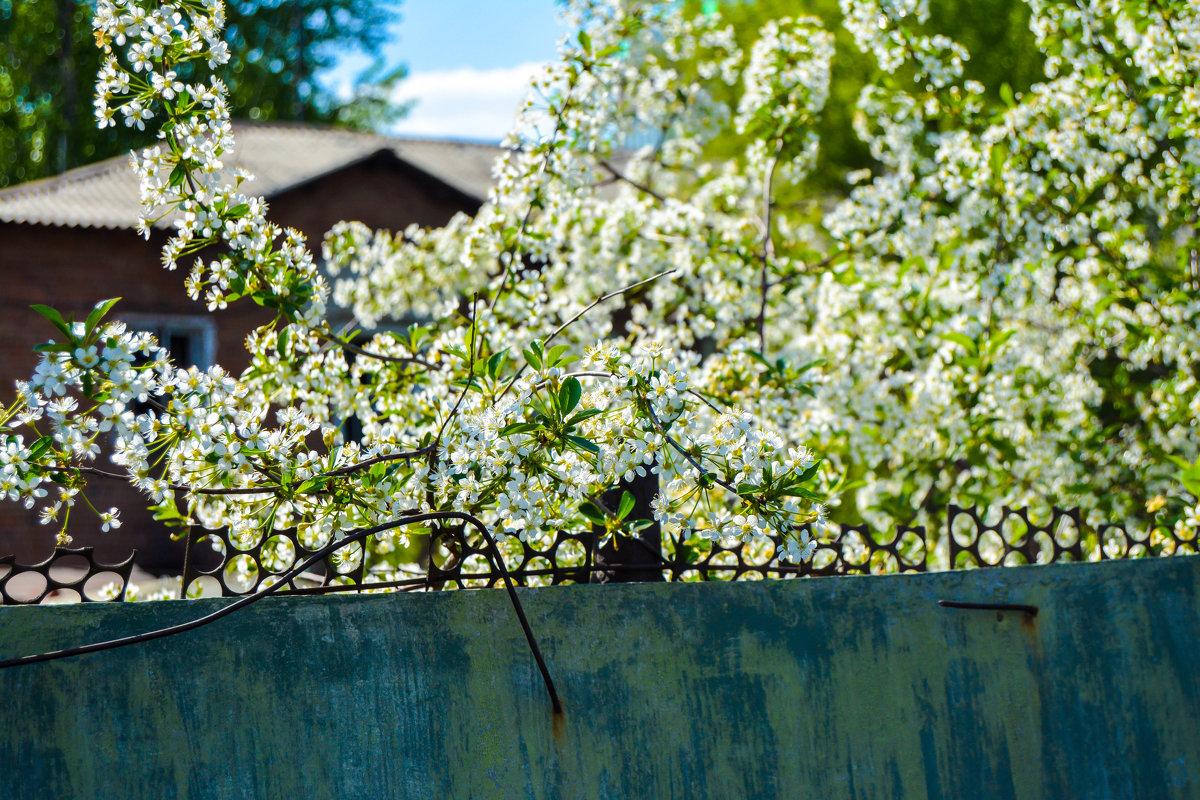 это была весна, но она уже давно позади - Света Кондрашова