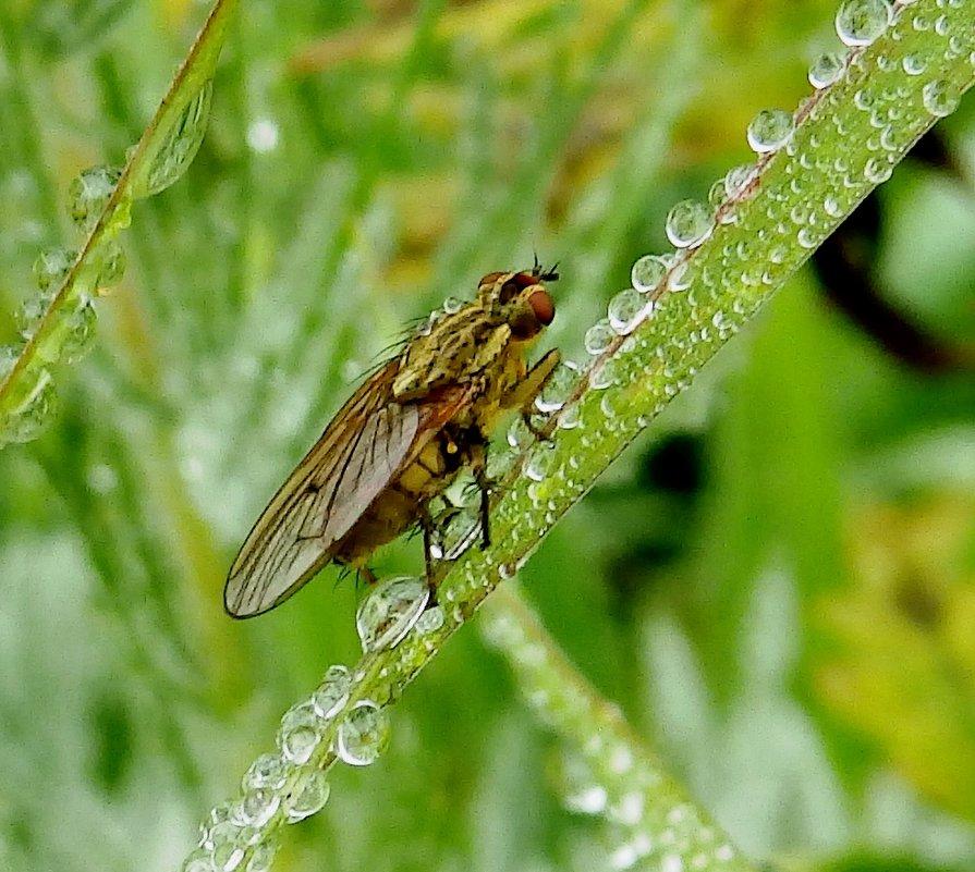 осенняя муха - Анна