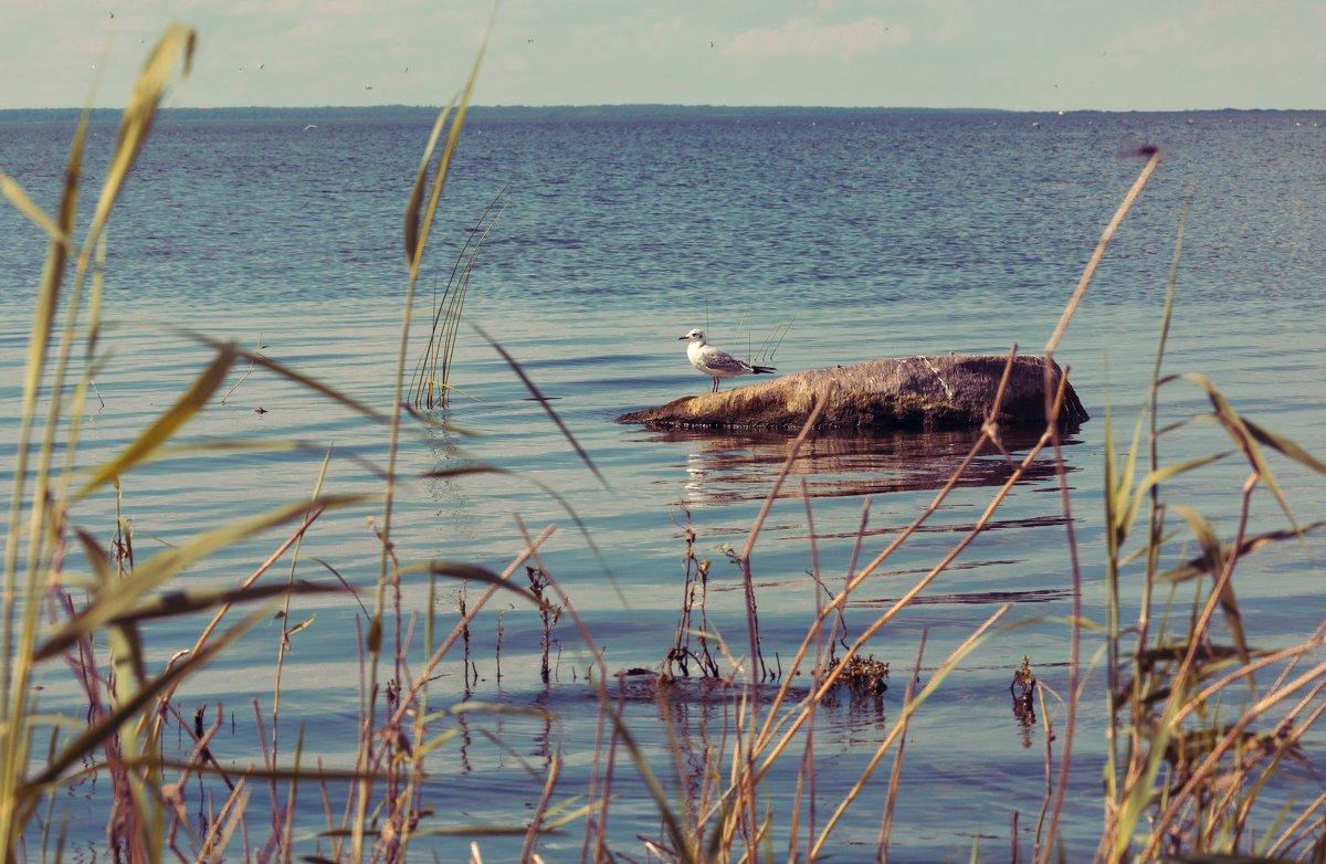 Чайка на отдыхе....)) - Катерина Чичина