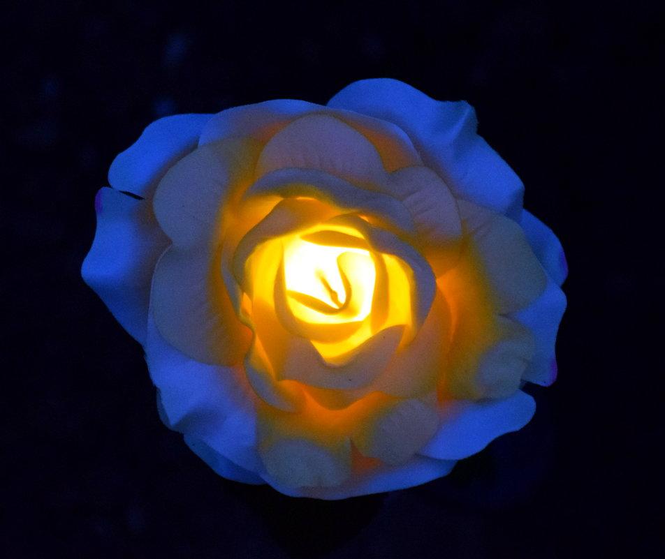 Роза садовая, пластиковая... - gegMapuXyaH