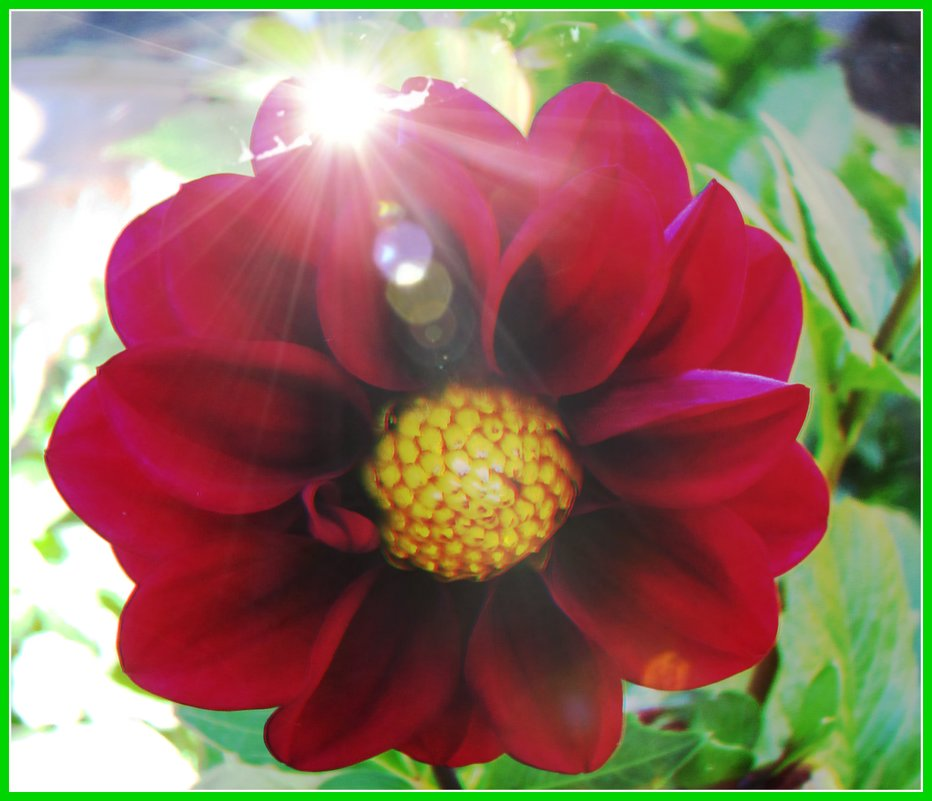 цветы осени - Надежда