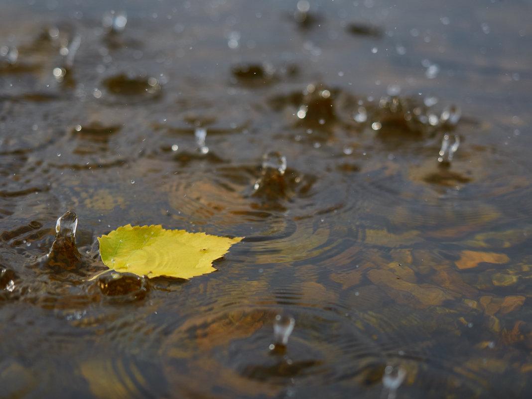 Дождь. - Сергей Адигамов