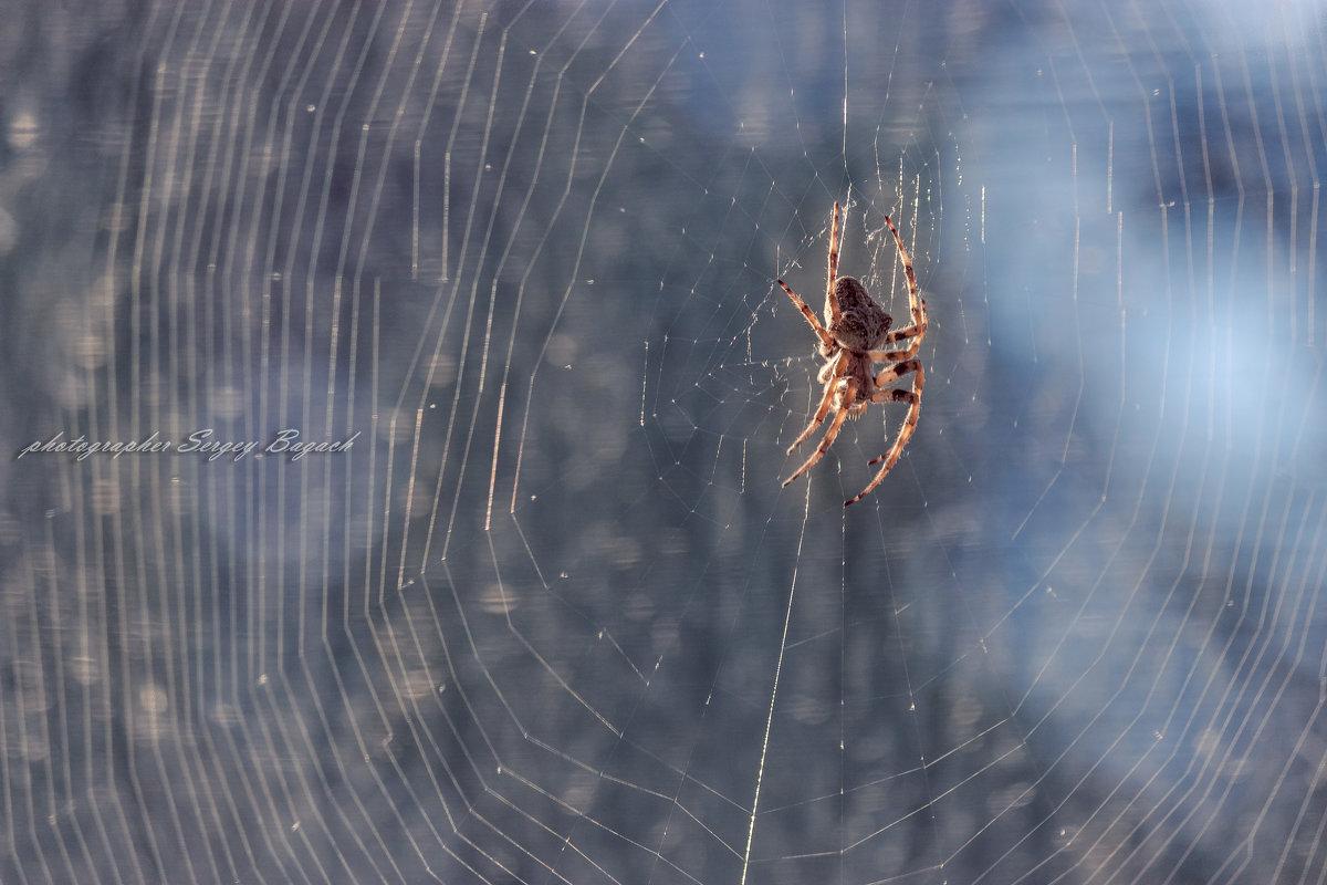 spider - Sergey Bagach