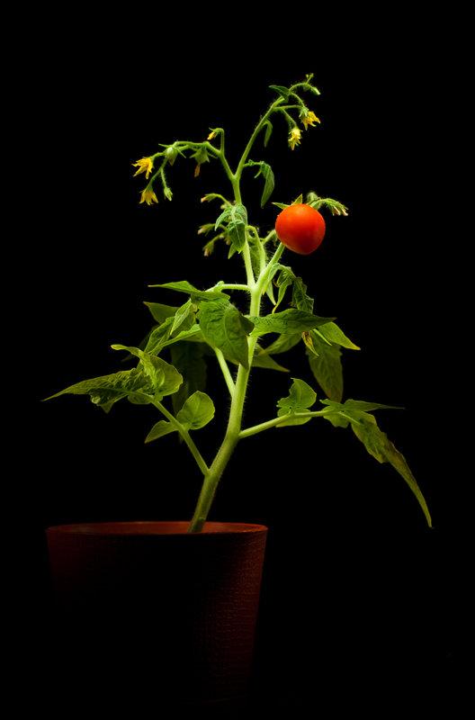 «Урожай» :) - Андрей Окороков