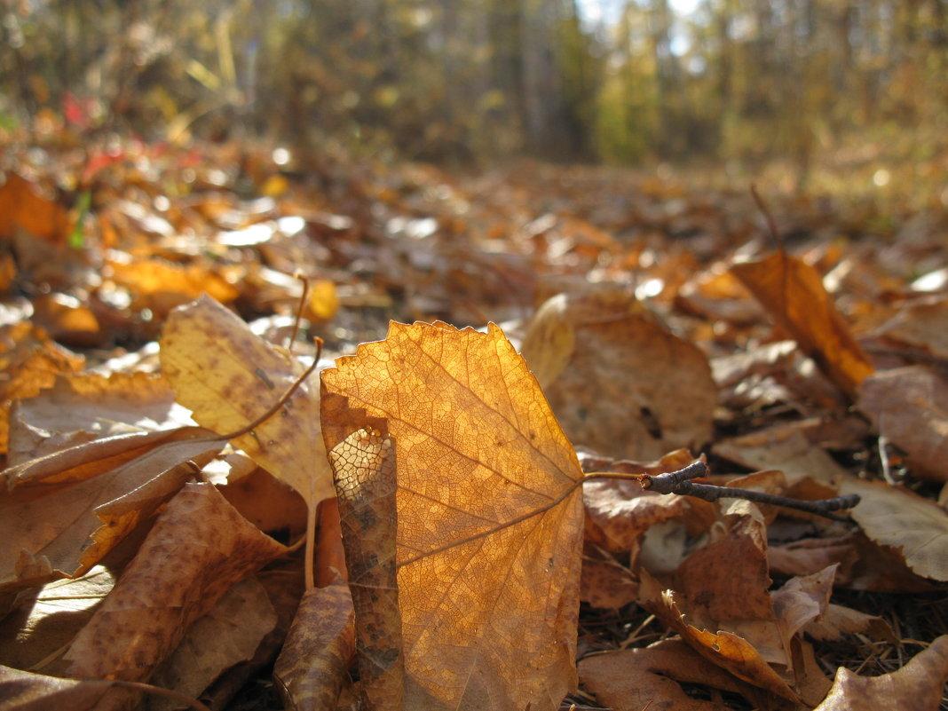 снова осень - Ольга