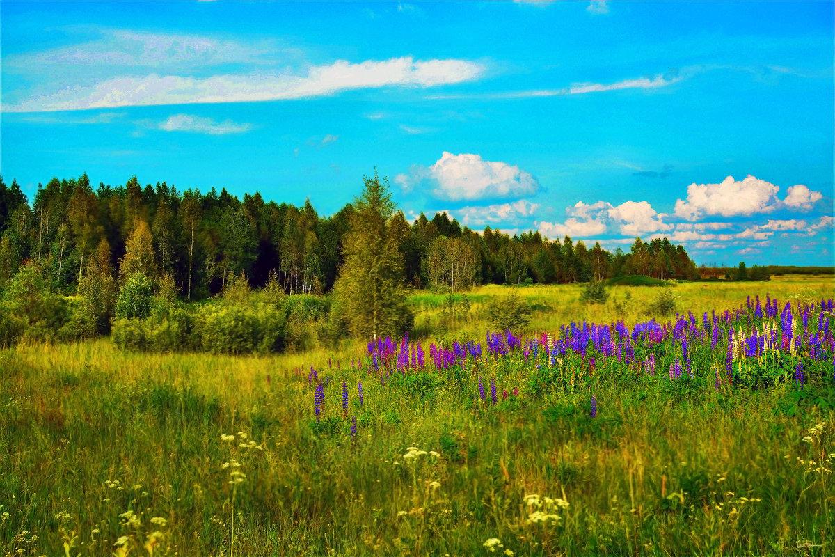 Пейзаж с люпином - Юрий