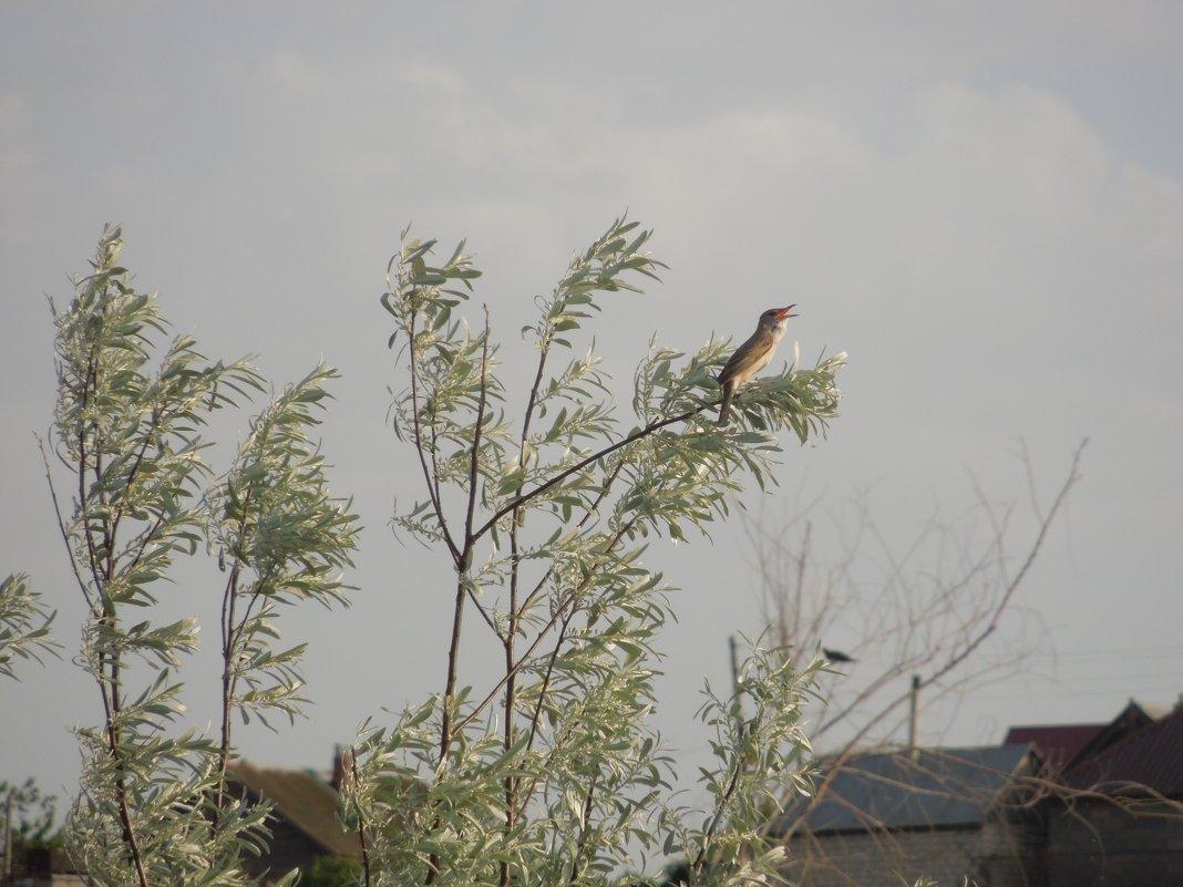 неизвестная птица - Анастасия сосновская