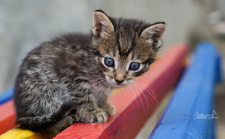 Дворовый котенок - AnnetSV