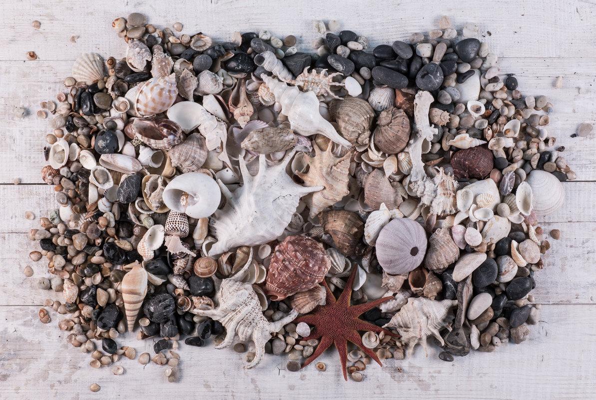 коллекция ракушек - Жанна