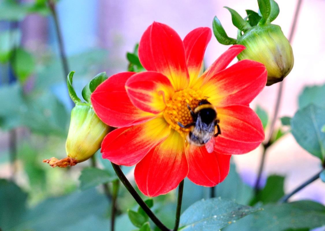 Пчелка и цветок - Марина Романова