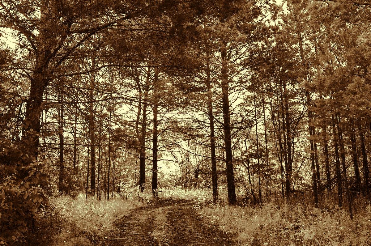 сумеречный лес - Анна -