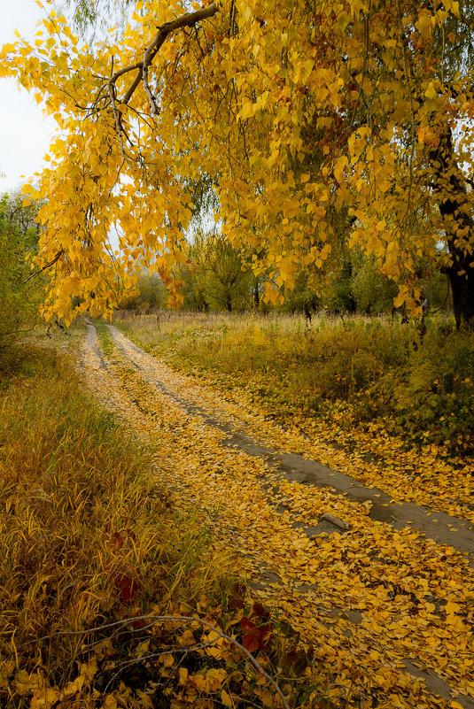 Оделись в жёлтое деревья и дороги… - Алексей (АСкет) Степанов
