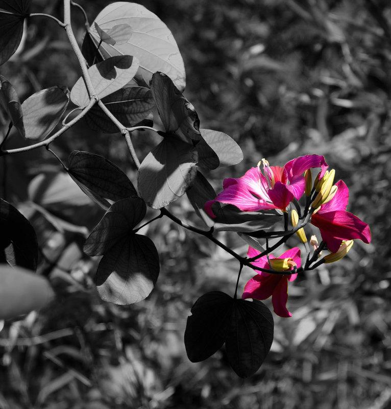 Цветок - Alexander Dementev