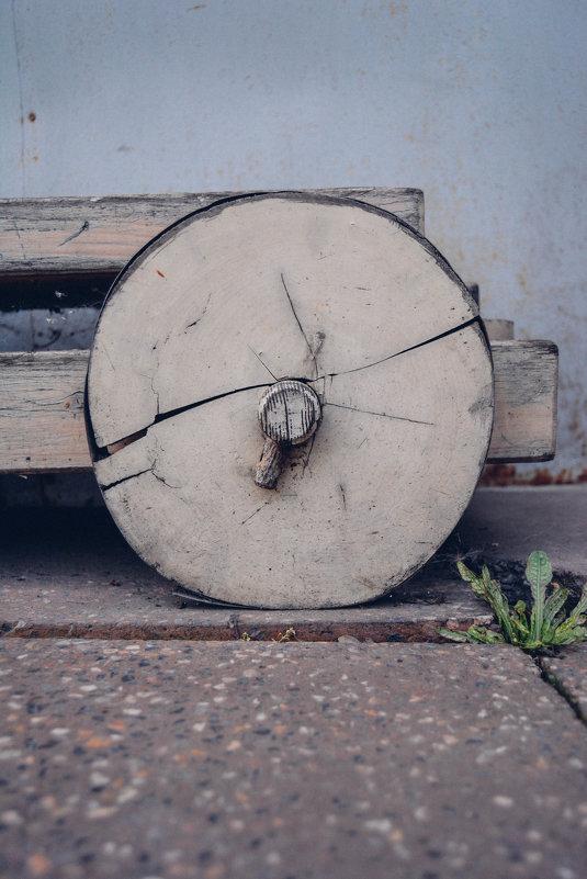 колесо - Света Кондрашова