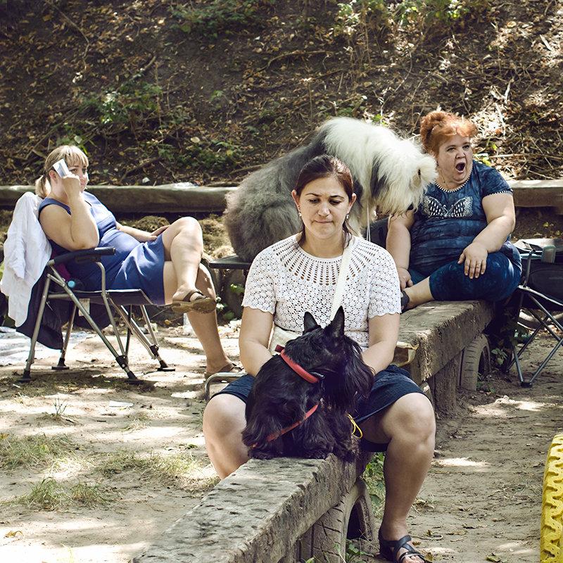 Выставка собак - Ирина Сафонова