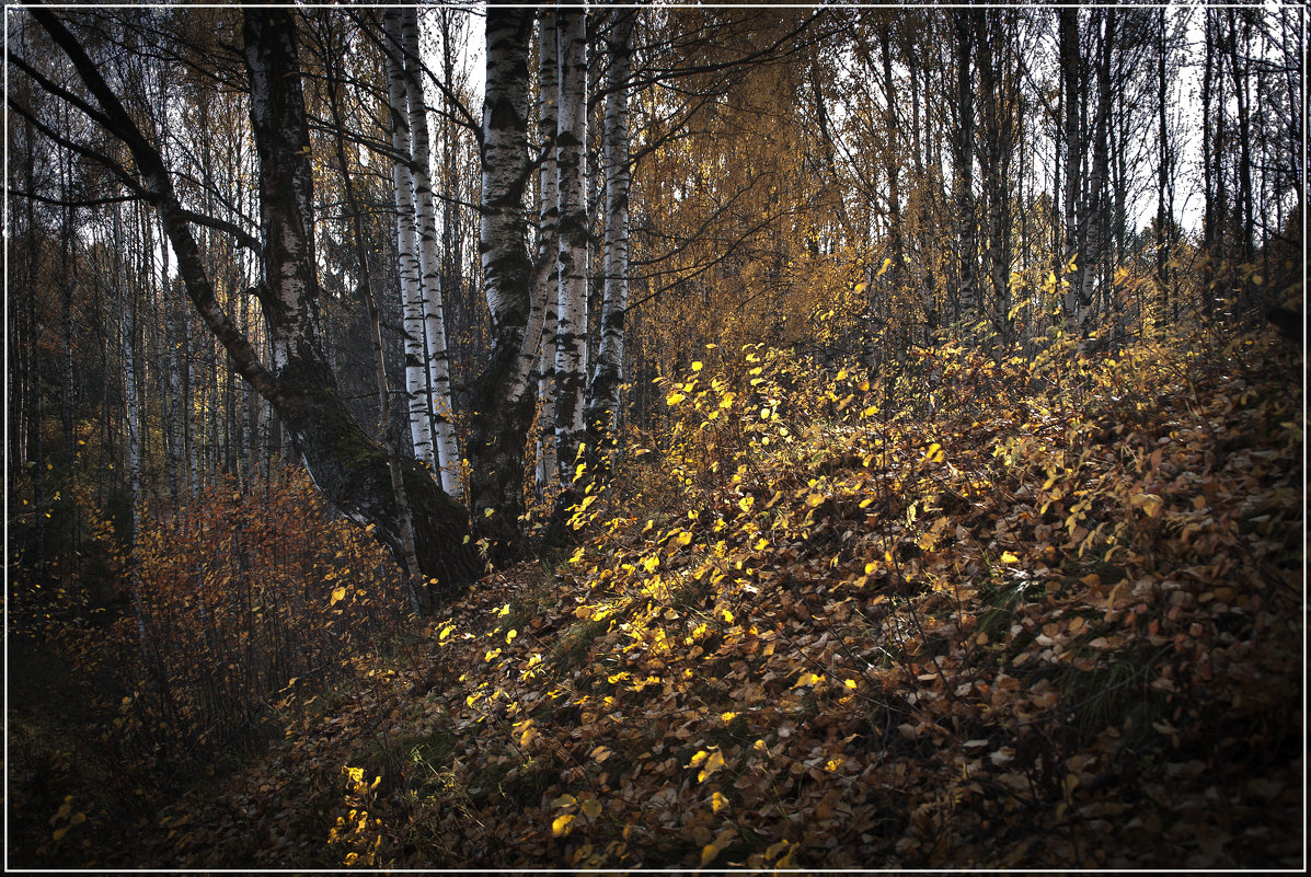 Осень - Владимир Белозеров