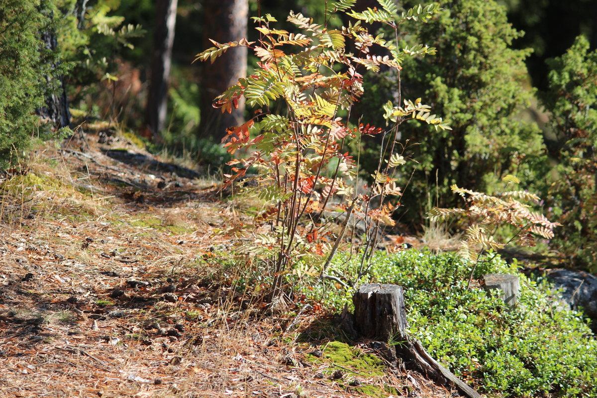 прогулка в лесу - Надежда Щупленкова