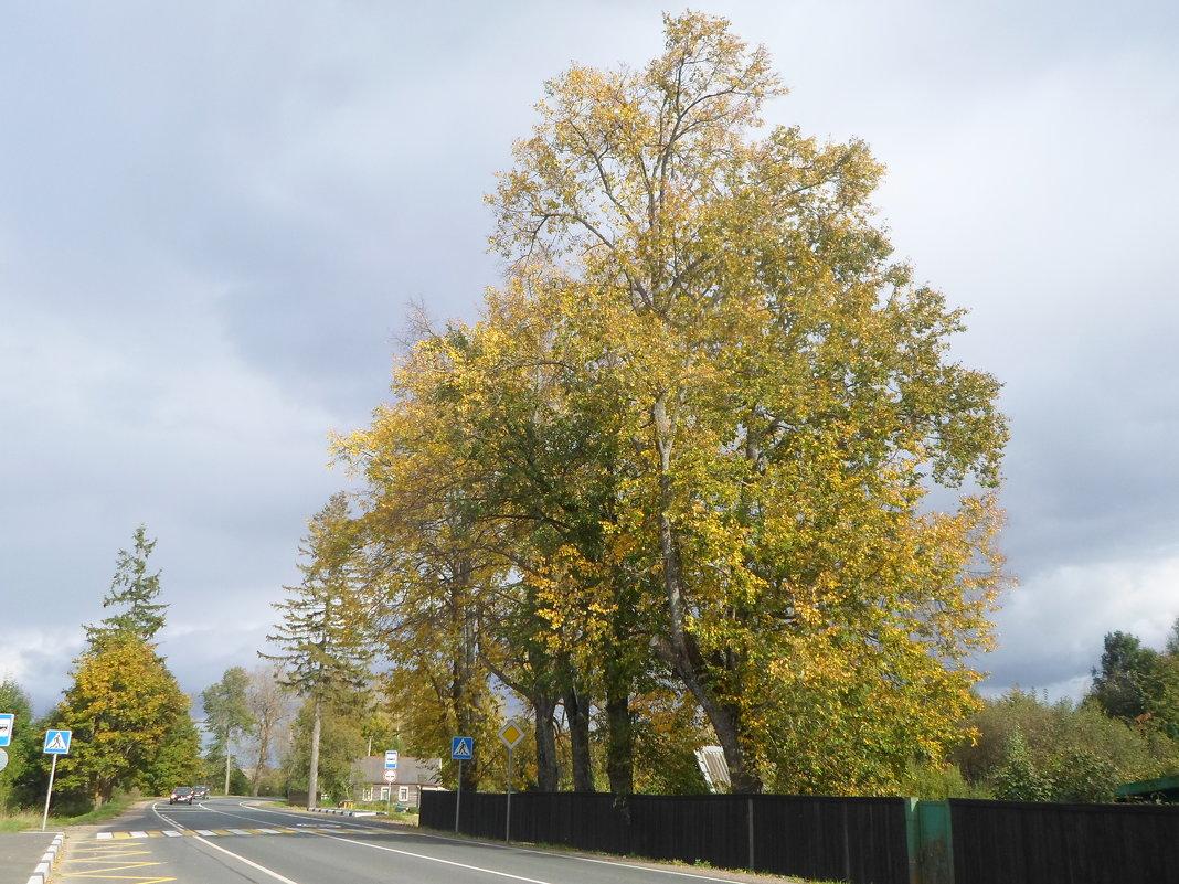 Осень на Псковщине - BoxerMak Mak