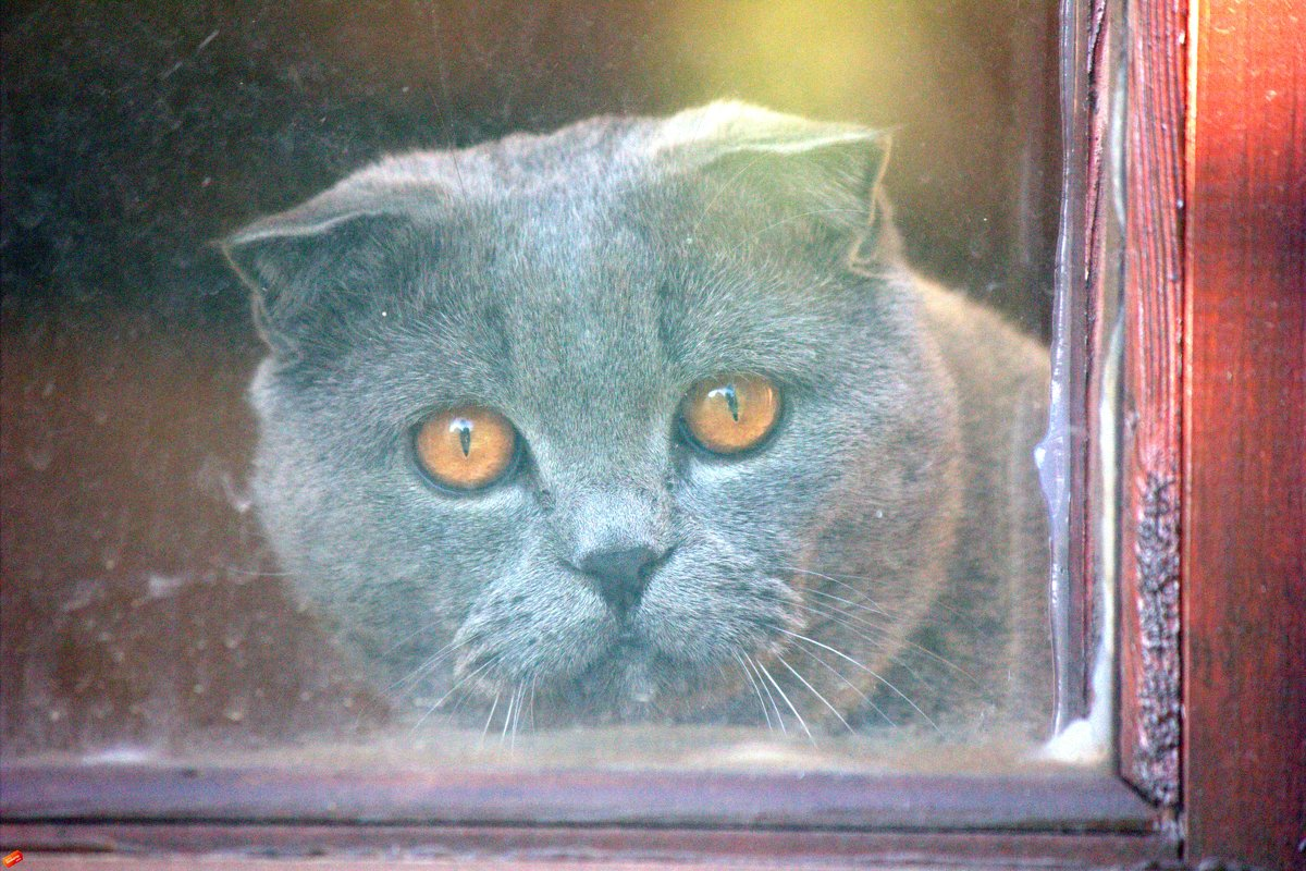 За окном - Виталий  Селиванов