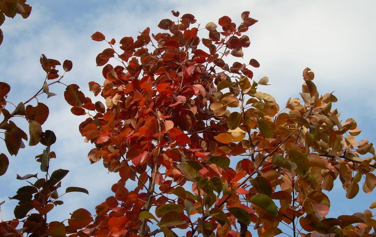 Золотая осень - татьяна