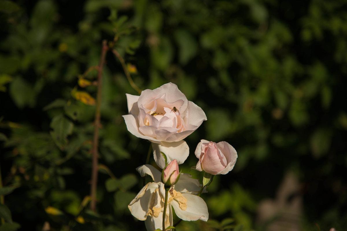 Сентябрьское цветение - cfysx