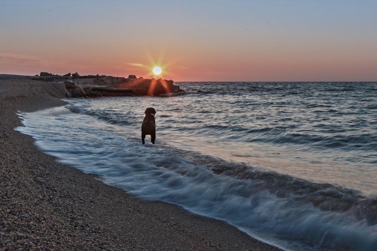 Встречающий рассвет - Андрей Медведев