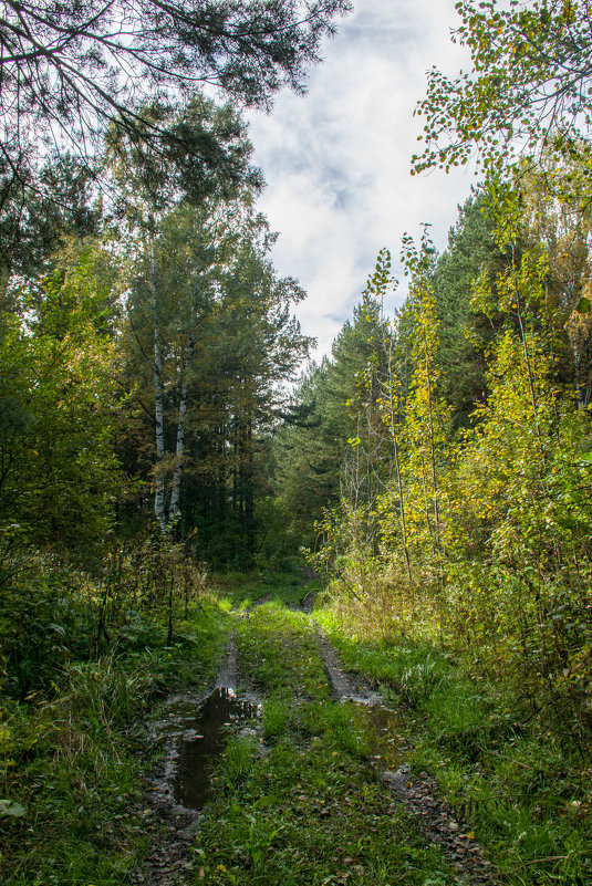 дорога в лес - Юрий Борзов
