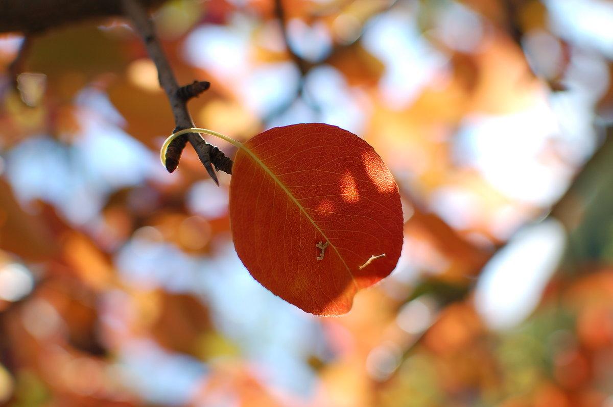 Краски осенних листьев просто неповторимы - Аl Anis