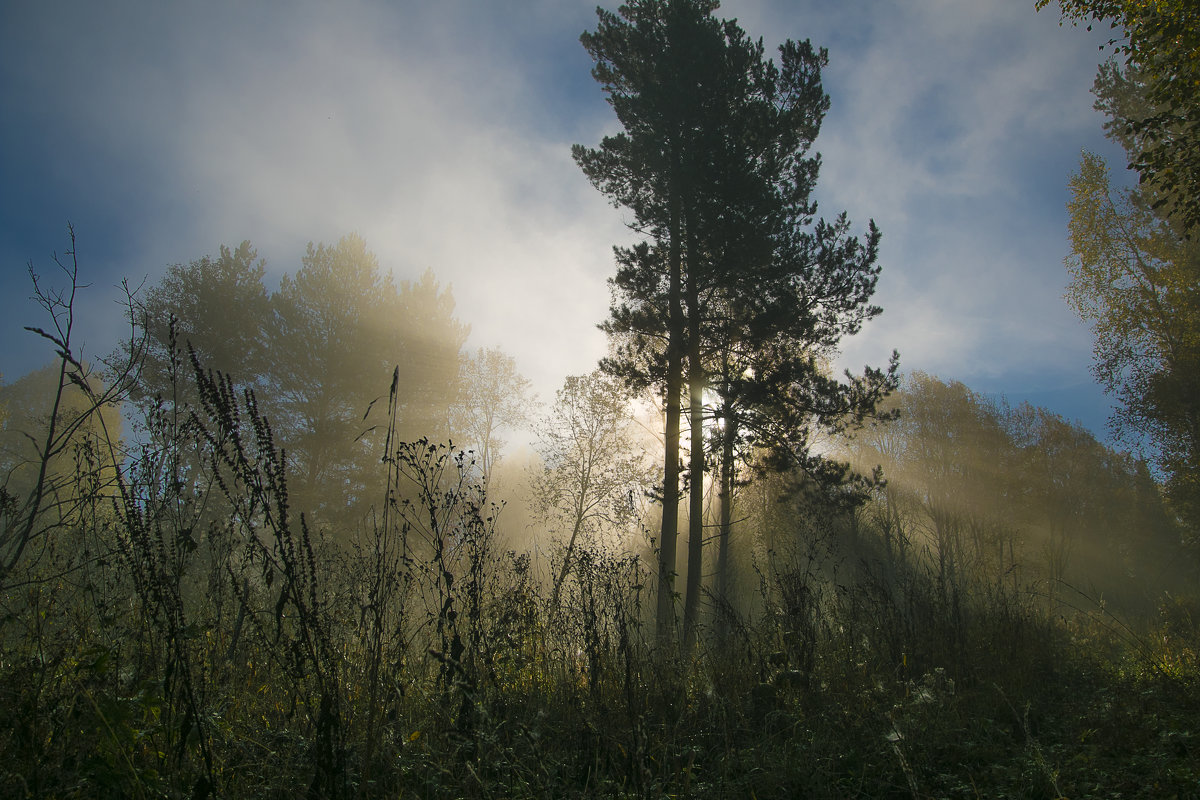 утро в лесу - Константин