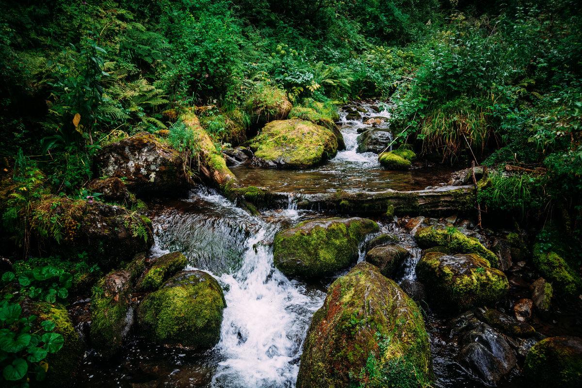 Природа - Роман Жданов