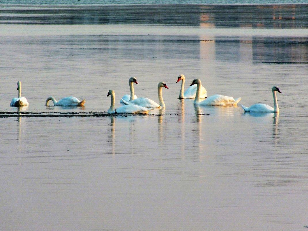 на соленом озере - Natali Kosheleva