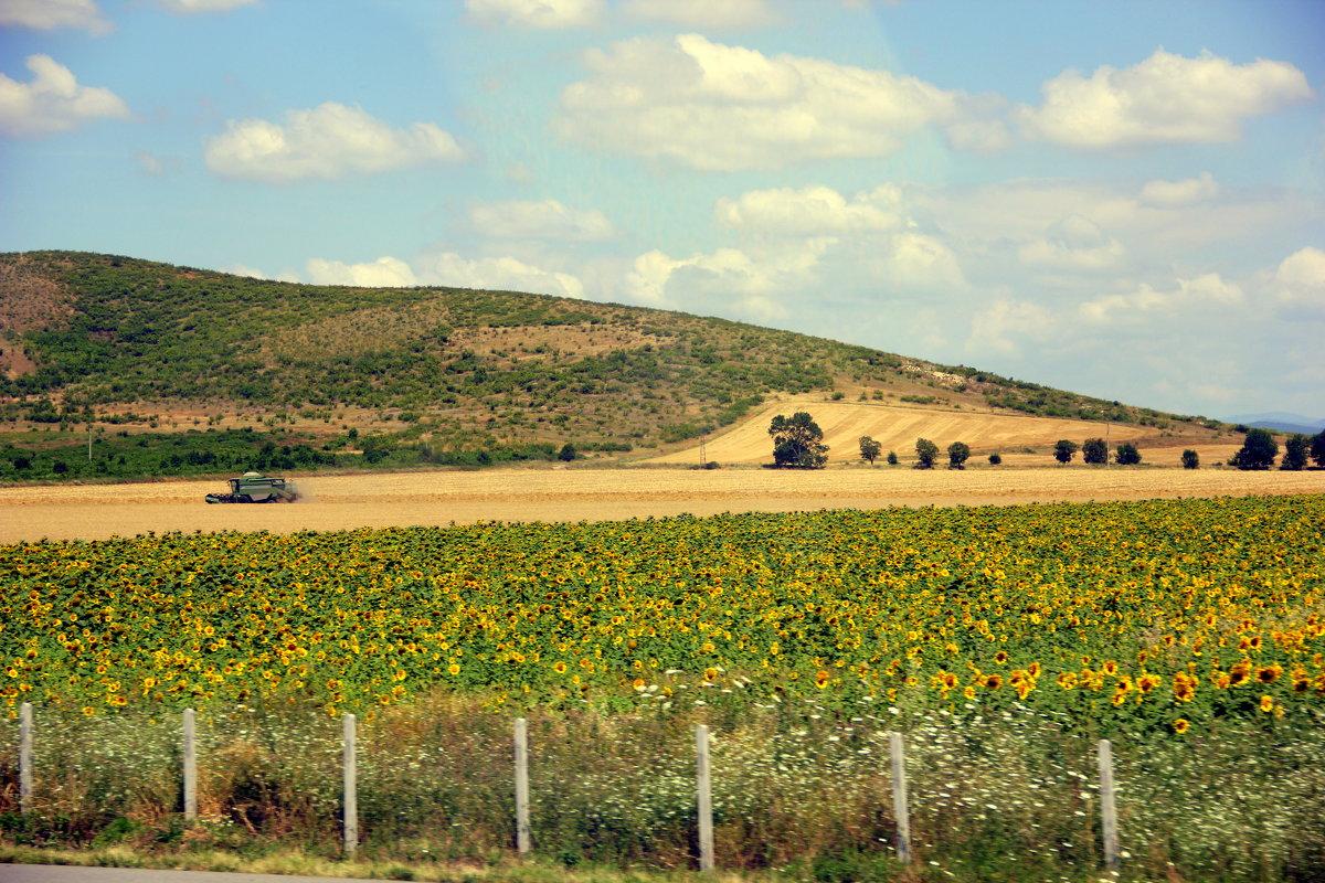 Болгария - Ольга