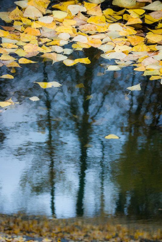 Осень в отражениях - Алексей (АСкет) Степанов