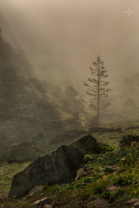Утренний туман - Павел Федоров
