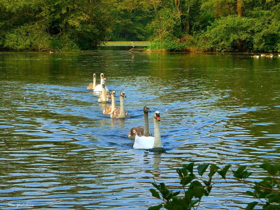 Лебединое озеро (серия) Потянулись на фотосессию - Nina Yudicheva