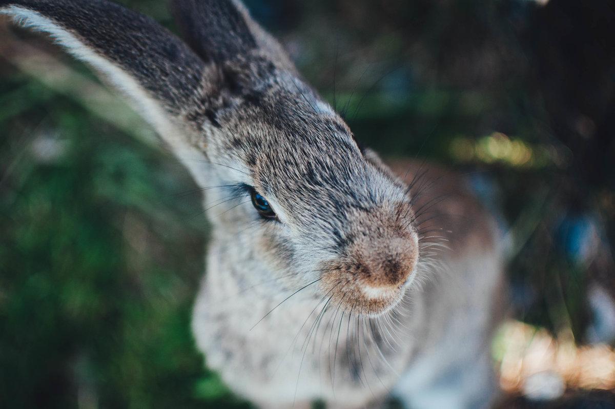 bunny - SteelRabbit Mustache