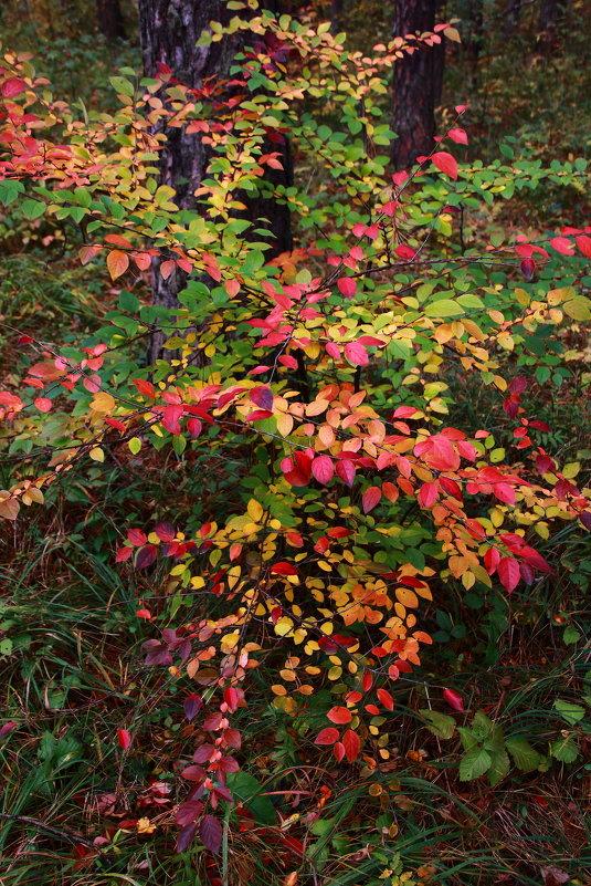 Осень - Альбина