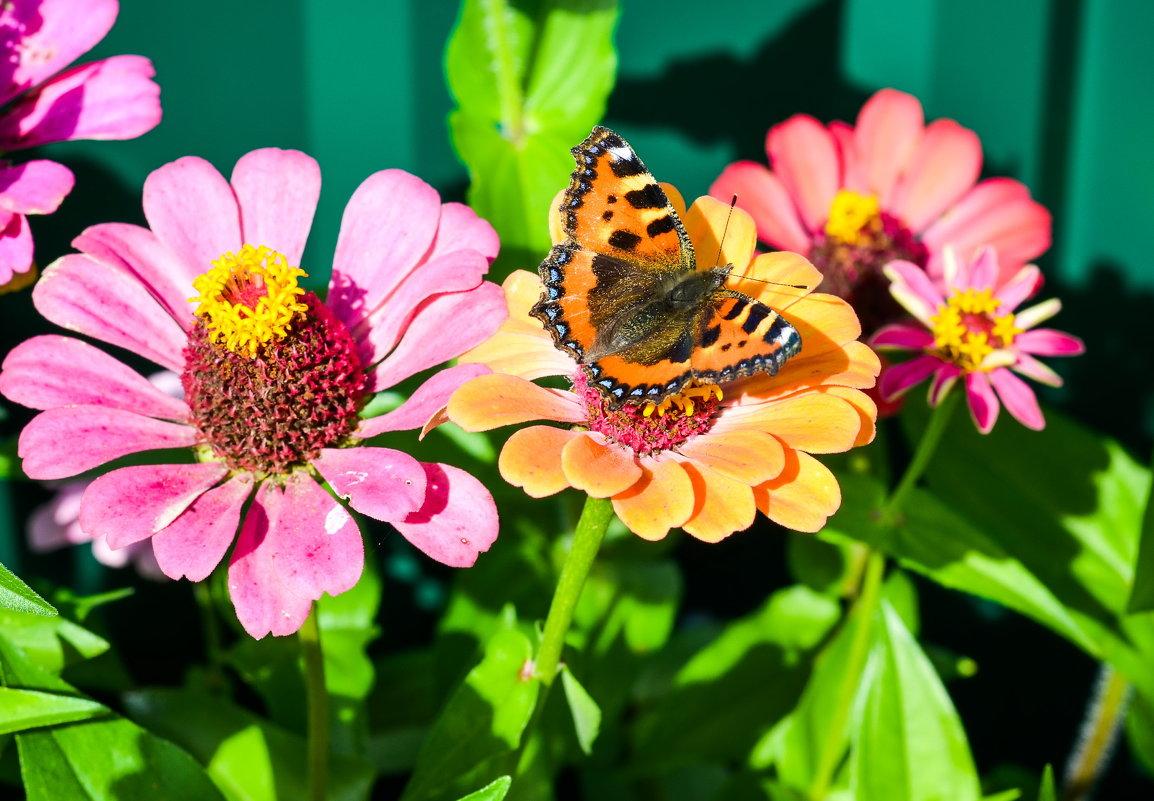 Бабочка в солнечном свете... - Марина Романова