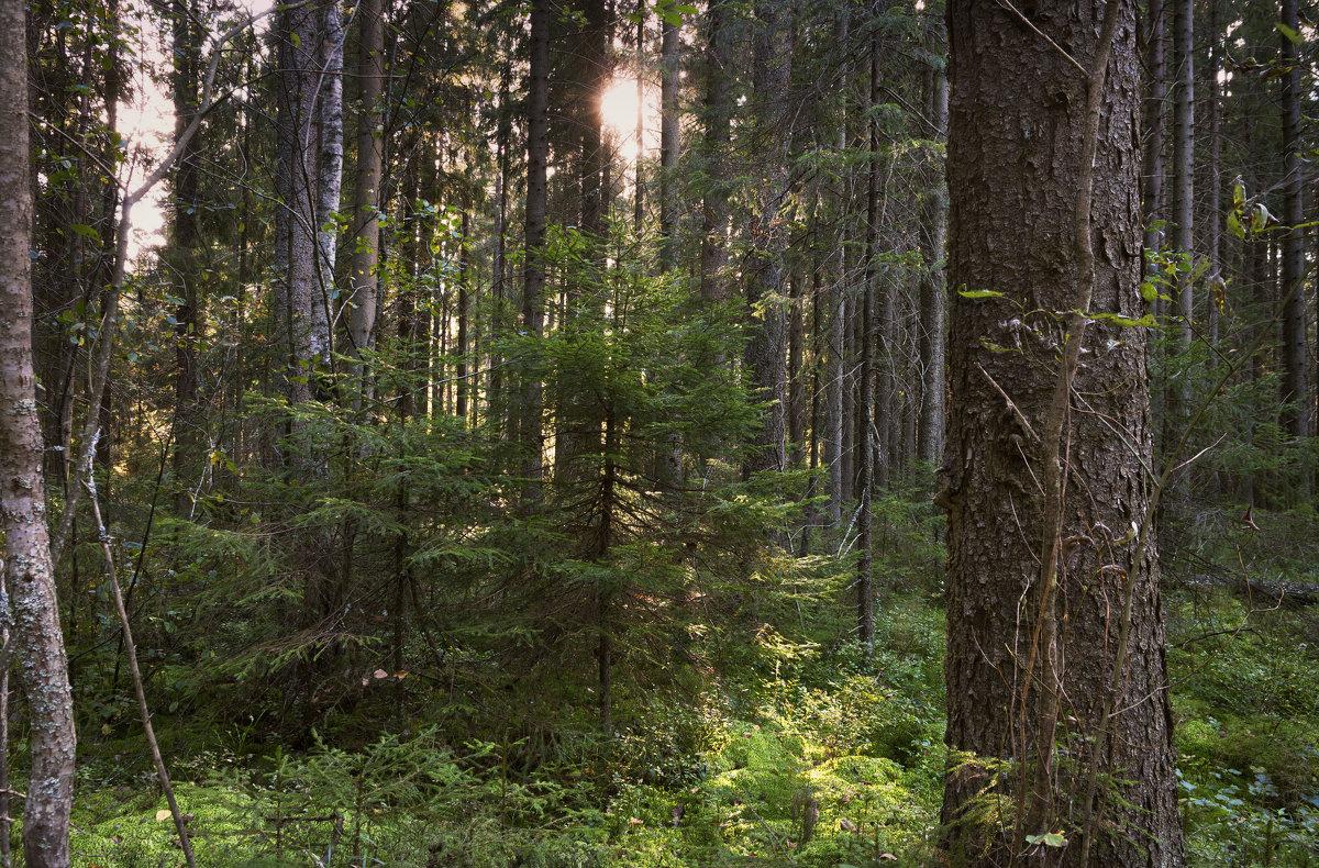Лесной этюд - Aнна Зарубина