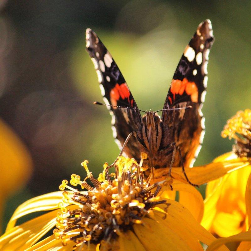 Бабочка - Ирина ...
