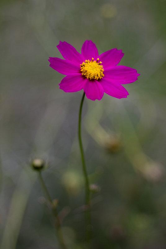 Осень, цветок... - Татьяна Петрова