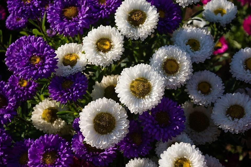 Про цветы сверху - Сергей Анисимов