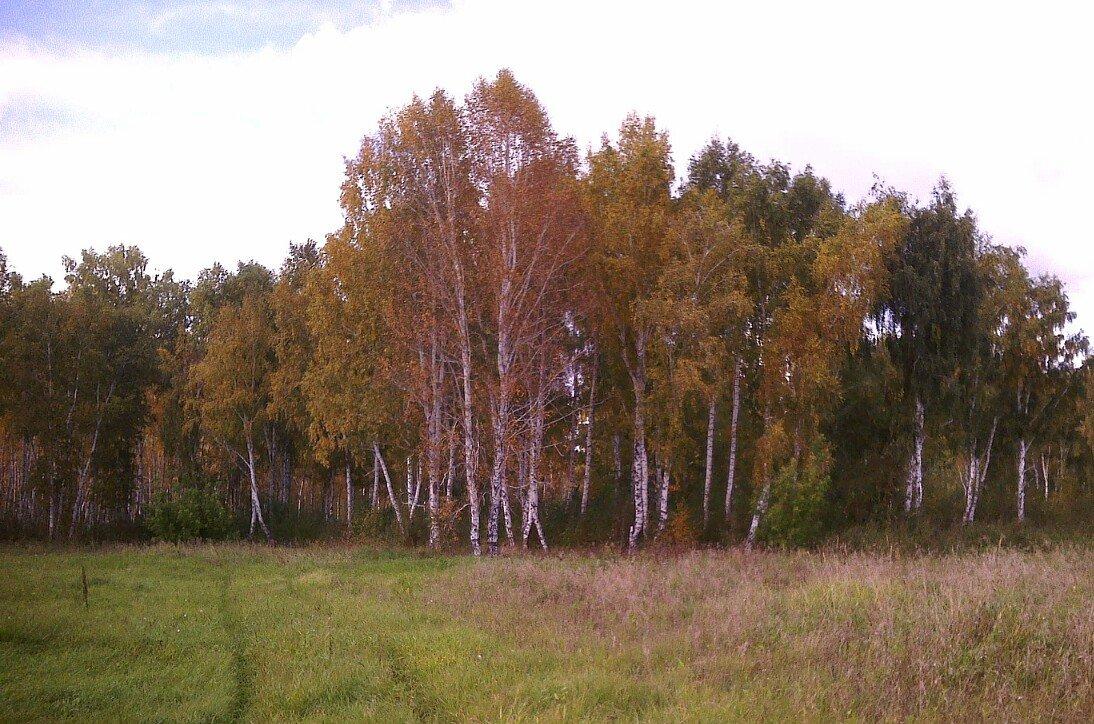 Осенний лес - Елена *