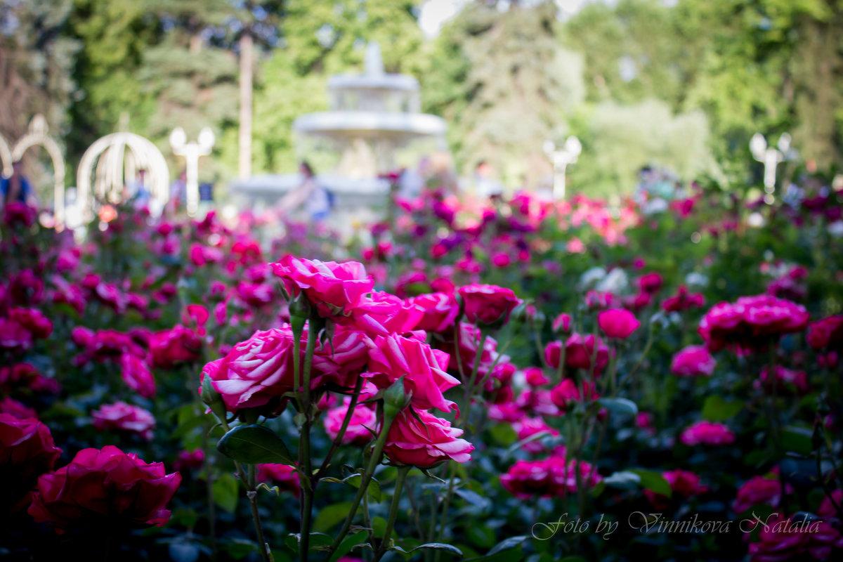 Розы в парке - Наталья Винникова