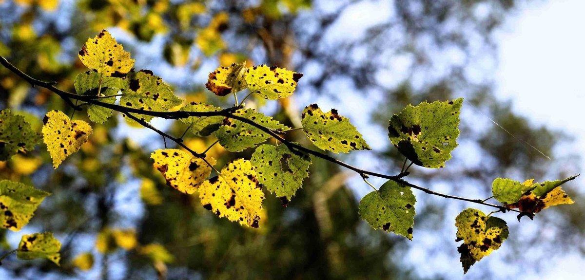 Осенние листья - Viktor Heronin